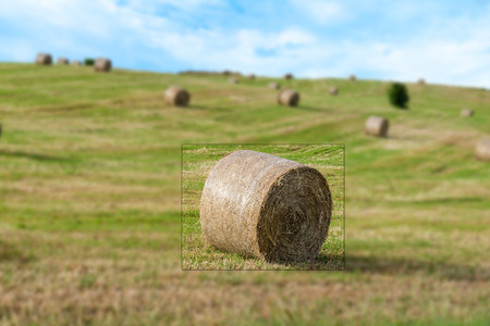 hay bales: a view of hay bales in a country hill