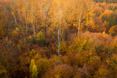Voderady Beechwood is a National Nature Reserve. There are natural beech forests on relatively acidic soil in the reserve, and the type of forest habitat that needs protection.