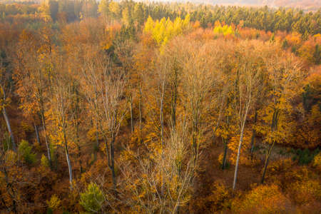 Voderady Beechwood is a National Nature Reserve. There are natural beech forests on relatively acidic soil in the reserve, and the type of forest habitat that needs protection. Stok Fotoğraf - 123278028