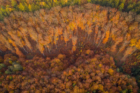 Voderady Beechwood is a National Nature Reserve. There are natural beech forests on relatively acidic soil in the reserve, and the type of forest habitat that needs protection. Stok Fotoğraf - 123278027