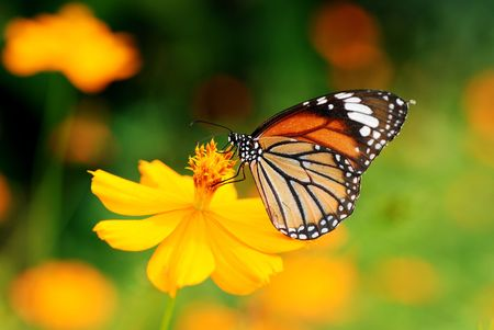 live action: butterfly