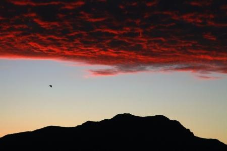 Eagle Flight under red cloud sky in Colorado