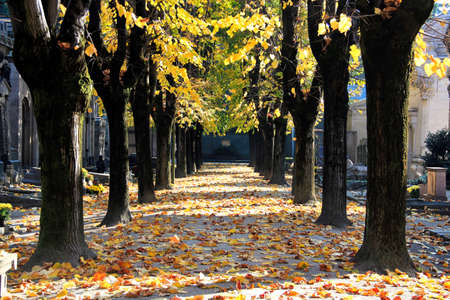 wooded: Wooded way in autumn - Cimitero Monumentale Stock Photo