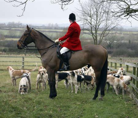 animals hunting: hunt meeting