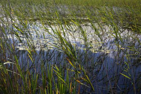 loch: Islay Loch Finlaggan reeds Stock Photo