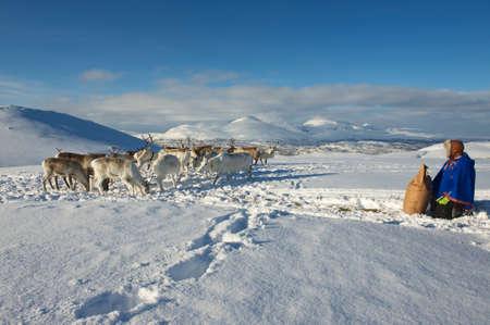 Tromso, Norway - March 28, 2011: Saami man brings food to reindeers in deep snow winter, Tromso region, Northern Norway.