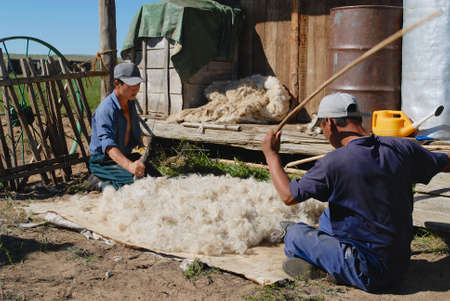 ethnographical: Harhorin, Mongolia, August 20, 2006 - Mongolians produce felt in Harhorin, Mongolia. Felt is essential material for yurt insulation and winter clothes in Mongolia.