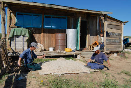 ger: Harhorin, Mongolia, August 20, 2006 - Mongolians produce felt in Harhorin, Mongolia. Felt is essential material for yurt insulation and winter clothes in Mongolia.