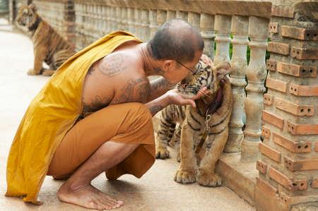 baby tiger: Saiyok, Thailandia 24 maggio 2009 - monaco buddista bacia bambino tigre indocinese in Saiyok, Thailandia.