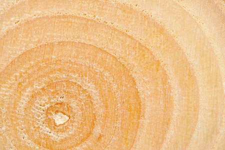 relict: Closeup background of year rings texture of the unique relict ash tree (Fraxinus sogdiana) grown in the Sharyn canyon, Kazakhstan.