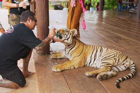 Kanchanaburi, Thailand, May 24, 2009 - Man feeds Indochinese tiger with milk from a bottle in Kanchanaburi, Thailand. Editorial