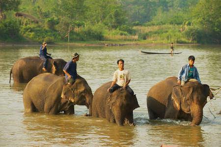 LUANG PRABANG, LAOS - APRIL 14, 2012: Lao people cross river with elephants at sunrise in Luang Prabang, Laos.