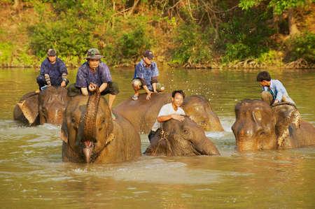 Luang Prabang, Laos - April 14, 2012: Lao people bathe elephants in a river at sunrise in Luang Prabang, Laos.