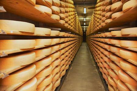 Gruyeres, Switzerland - December 11, 2009: Rows of cheese maturing in a cellar of a cheese factory in Gruyeres, Switzerland. Redakční