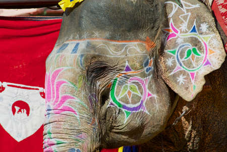 Traditionally decorated elephant head near Amber fort in Jaipur, Rajasthan, India.