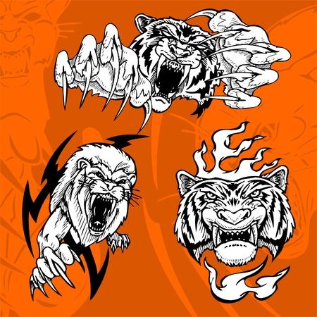 jaws: Tiger and Lion.Predators.