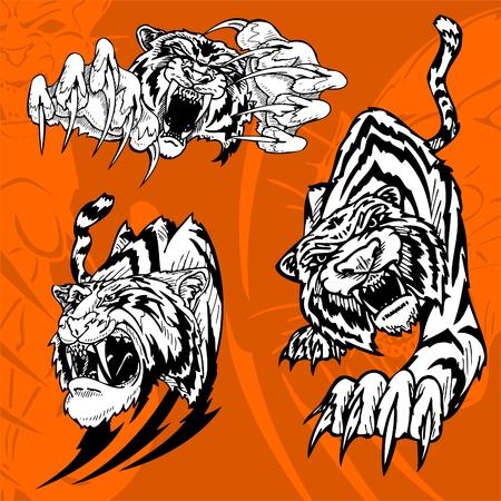 pazur: Tiger.Predators.