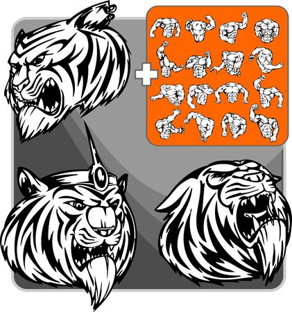 snarling:  tiger. Mascot template