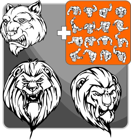 muscule: Wild lion with a red mane and ravenous smile Illustration