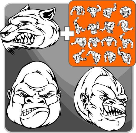 agression: Adultes loup gris sauvage avec les dents sharp  Illustration