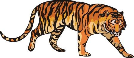 The orange tiger lays. Big cats.   Vector