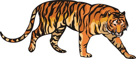 dangerously: The orange tiger lays. Big cats.