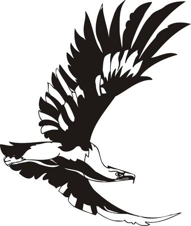 Eagle - predatory bird. illustration. Ready for vinyl cutting. Stock Vector - 8332273