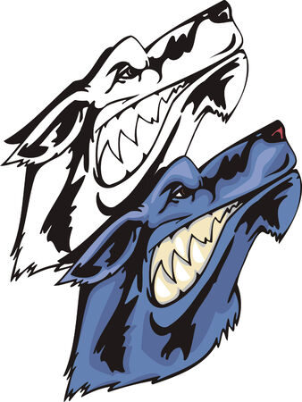 The dark blue wild wolf with a predatory grin looks upwards. Mascot template. Vector illustration - color + bw versions.