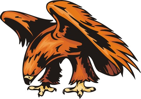 plumage: Eagle with orange plumage. Predatory birds.  illustration - color   bw versions.