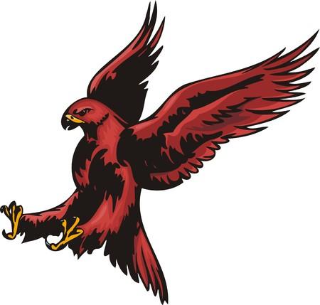 piume: Aquila con piumaggio rosso. Uccelli predatori.  illustrazione - versioni di colore bianco e nero.