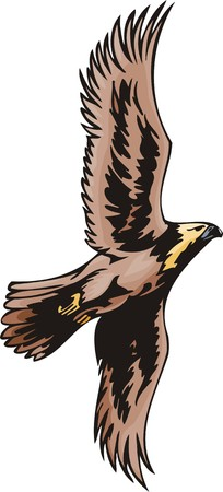 bird of prey: Eagle with brown plumage. Predatory birds.  illustration - color   bw versions.