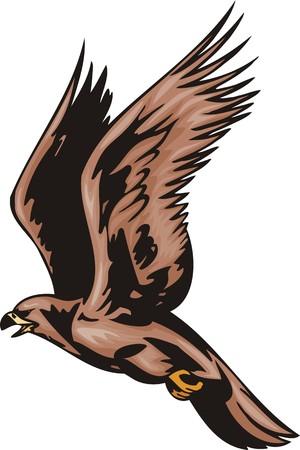 Il falcon con piumaggio marrone.Uccelli predatori.  illustrazione - versioni di colore bianco e nero.