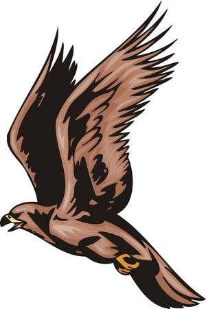 The falcon with brown plumage.Predatory birds. illustration - color b/w versions.