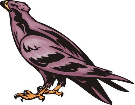 The goshawk with violet plumage. Predatory birds.  illustration - color   b/w versions. Stock Vector - 8651027