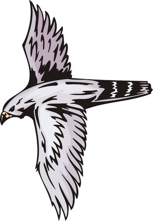 bird of prey: The falcon with white plumage in a black stria. Predatory birds.  illustration - color   bw versions.