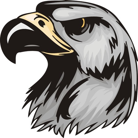 Head of an eagle with the big sharp bill. Predatory birds.   illustration - color   bw versions. Vector