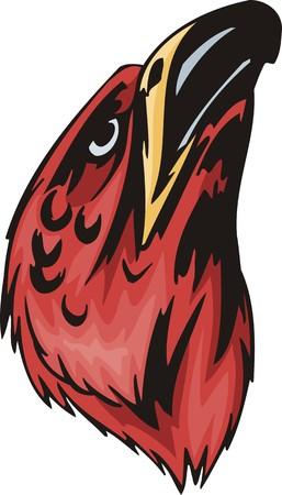 zopilote: Jefe rojo del ratonero con el gran proyecto de ley. Aves predadoras.  Ilustraci�n - versiones de color en blanco y negro.