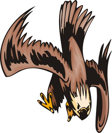 angry sky: The eagle with brown-white plumage attacks the purpose. Predatory birds.  illustration - color   bw versions.
