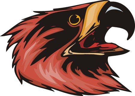 The big head of a red eagle. Predatory birds.  illustration - color   bw versions. Vector