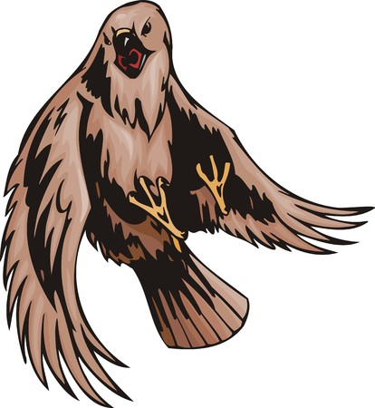 buzzard: The buzzard with brown plumage. Predatory birds.  illustration - color   bw versions. Illustration