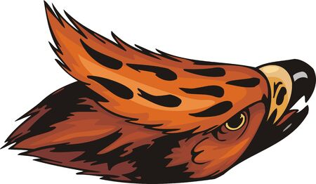 goshawk: Head of the orange falcon. Predatory birds. illustration - color   bw versions.