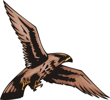 Young sea eagle with brown plumage.  Predatory birds. illustration - color   bw versions. Vector