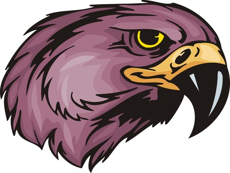 Head of an eagle with yellow eyes and the big bill.  Predatory birds. illustration - color   bw versions. Vector