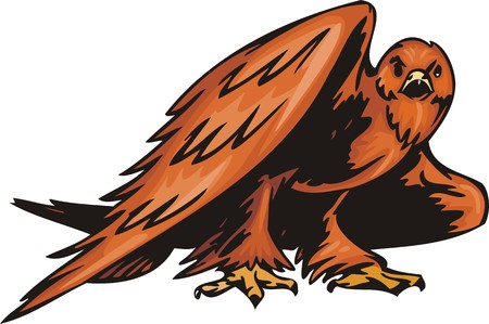 The big eagle with orange plumage. Predatory birds.  illustration - color   bw versions. Vector