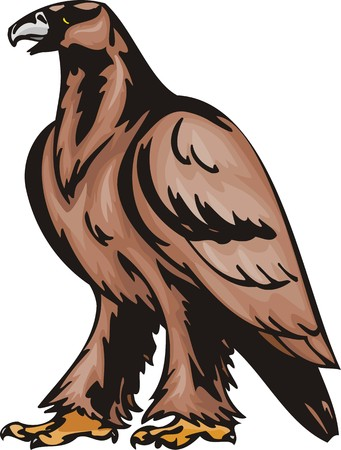 The big eagle with brown plumage. Predatory birds.  illustration - color   bw versions. Vector
