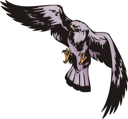Kite with violet plumage. Predatory birds illustration - color   bw versions. Vector