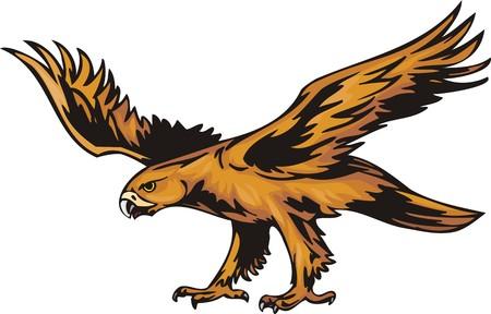 Young sea eagle with orange plumage. Predatory birds illustration - color   b/w versions. Stock Vector - 8654383