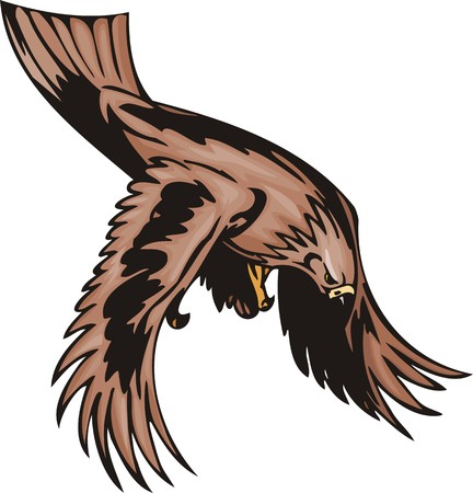 The eagle with brown plumage has noticed the purpose. Predatory birds.  illustration - color   bw versions. Vector