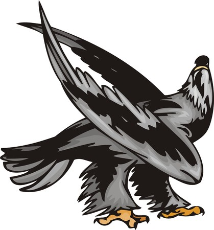 black plumage: Eagle with black plumage. Predatory birds. illustration - color   bw versions.