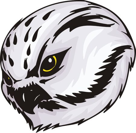 stria: Head of an owl with white plumage in a black stria. Predatory birds  illustration - color   bw versions. Illustration